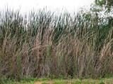 High Grass.jpg