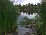 Lake and Reeds 4.jpg