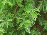 Leaves 2 - BW.jpg