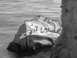 Bird Rock .jpg