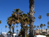 Palm Trees 2 .jpg