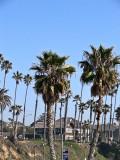 Palm Trees 1 .jpg