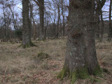 Gartfairn Woods, Loch Lomond NNR