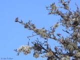 Lichen on an old crab apple tree, Loch Lomond NNR