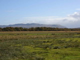 Campsie Hills and the Crom Mhin marsh, Loch Lomond NNR