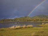 Rainbow over Balmaha Bay, Loch Lomond