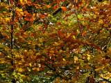 Autumn colours at Balmaha, Loch Lomond