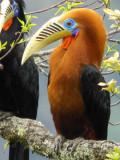 Bhutan Birds - Individual Species