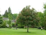 Devonshire Park, Shaughnessy