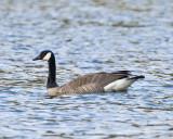 Apr 10 08 Lacamas Lake-29.jpg