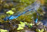 Aug 23 08 Portland Wildlife Pond-50.jpg