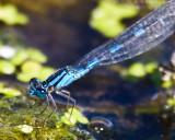Aug 23 08 Portland Wildlife Pond-63.jpg