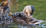 May 31 07 Critter Lake -019.jpg