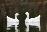 Nov 4 07 Critter Lake 5D-9.jpg