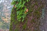 Nov 4 07 Critter Lake 30D-2.jpg