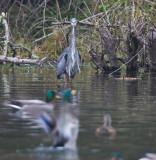 Nov 4 07 Critter Lake 5D-89.jpg