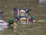Nov 4 07 Critter Lake 5D-139.jpg