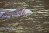 Nov 4 07 Critter Lake 5D-251.jpg