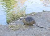 Nov 10 07 river lake 30D-38.jpg