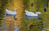 Nov 10 07 river lake 30D-52.jpg