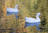 Nov 10 07 river lake 5D-12.jpg