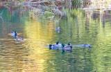 Nov 10 07 river lake 5D-16.jpg