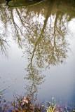Nov 20 07 Hillsboro river park-10.jpg