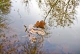 Nov 20 07 Hillsboro river park-12.jpg