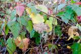 Nov 20 07 Hillsdale river park-137.jpg