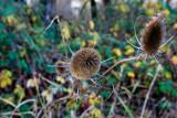 Nov 20 07 Hillsdale river park-145.jpg