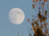 Nov 22 07 Ridgefield Refuge-44.jpg