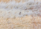 Nov 23 07 Mid Wash Road Trip-25.jpg