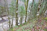 Dec 5 07 Oregon flood area-6.jpg