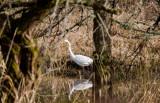 Wildlife and the Mk III, Salmon Creek Wetlands: Dec. 12 07