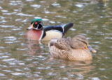Wildlife: The Mark III And The 5D at Critter Lake: Dec 11 07