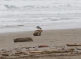 Dec 14 07 Oregon Coast Flood Zone 1D-7.jpg