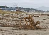 Dec 14 07 Oregon Coast Flood Zone 1D-210.jpg