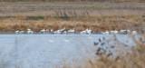 Dec 17 07 Ridgefield WL Refuge-197.jpg