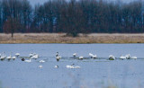 Dec 17 07 Ridgefield WL Refuge-327.jpg