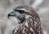 Ridgefield Refuge: Winter and the Eagles Are Here!