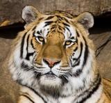 Zoo Visits