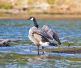 Apr 10 08 Lacamas Lake-184.jpg