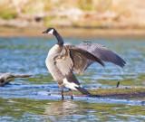 Lacamas Lake Revisited! Apr 10, 08