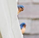 May 5 08 Birds at Apt-6.jpg