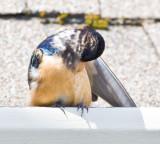 May 5 08 Birds at Apt-76.jpg