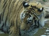 Philadelphia Zoo #6201_2