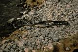 Wadi racer