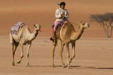 Bedu and camels
