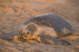 Turtle in sunshine