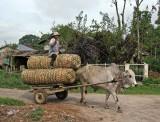 Bullock cart, Lingga